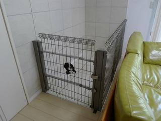犬サークル.jpg